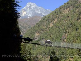Suspension bridge with Everest in Background